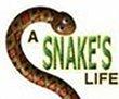 A Snakes Life - Boxshot