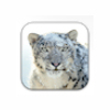 Apple Mac OS X Snow Leopard for Mac - Boxshot