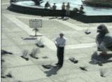 Screenshot af Aggressiv kæmpe-due